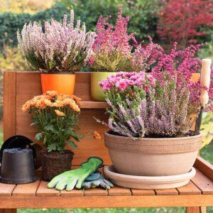 Lisa Fox Patio Gardening
